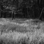 """Ferns"" by BLPhoto"