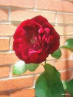 Old Red Rose 2 Painterly