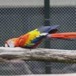 """""""Parrot"""" by fejesb"""