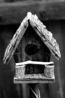 Bird house of the old