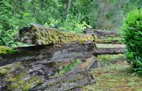 Country - Rotten log fence