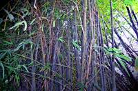 Live your life a Bamboo