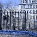 """Blue Flowers at Botany Pond, University of Chicago"" by LeonSarantosArtist"