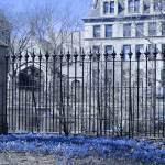 """Blue Flowers at Botany Pond, University of Chicago"" by LeonSarantosArtist"