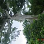 """""""Unusal Tree 3"""" by raquellegittens"""