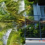 """""""Palm Tree"""" by raquellegittens"""