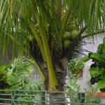 """""""Palm Tree 2"""" by raquellegittens"""