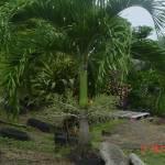 """""""Palm Tree View"""" by raquellegittens"""