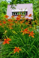 The Red Studio & the Orange Day Lilies