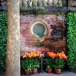 """Filoli Pool House with Orange Tulips"" by luv4pix"