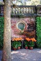 Filoli Pool House with Orange Tulips