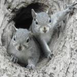 """Baby Squirrels"" by bettytong"