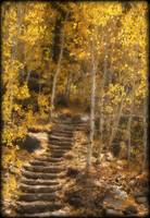Autumn Steps, Hope Valley