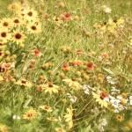 """Wildflowers"" by crittersbychris"