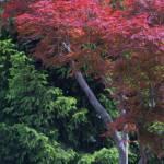 """""""Diagonal Red"""" by AlluringDigital"""