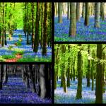 """Bluebell Collage"" by ianjeffrey"