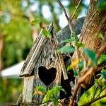 """bird house"" by CPLUSYPHOTOGRAPHY"