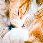 """Sleeping cats"" by CPLUSYPHOTOGRAPHY"