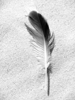 Feather and Sand (Black & White)