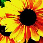 """Black Eyed Susan Pop Art"" by PurpleSkyPhoto"