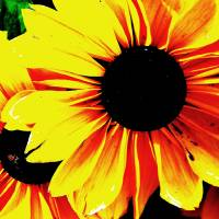 Black Eyed Susan Pop Art Art Prints & Posters by Laura Preston