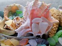 SHELLS AND SEAGLASS