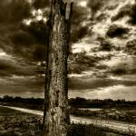 """DeadTree2"" by EricSimpson"