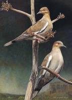 southern vista / white winged doves