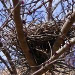 """nest2"" by Brightwood"