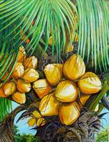 YELLOW COCONUT TREE