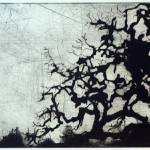 """Annadel-Oak"" by ECP"