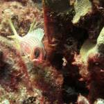 """IMG_7119-Squirrelfish"" by checkman"