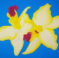 Yellow Orchides