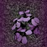 """Violet Life"" by CherylCharette"