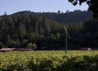 Napa Valley Afternoon, North