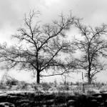 """""""Dark Kentucky Days"""" by BluegrassOriginals"""