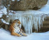 ice cave / tiger