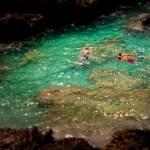 """Snorkeling in Bermuda"" by dennisherzog"
