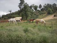 My Favorite Horses at Palomar Mt.