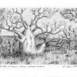 """""""Boab Tree, Kimberley, Western Australia"""" by kimwainwright"""