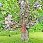 """The Old Shoe Tree"" by digitalexpressions"
