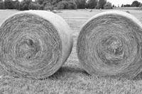 Round Hay Bales Black and White