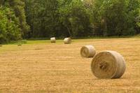 Field of Freshly Baled Round Hay Bales