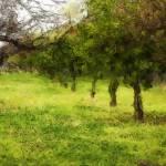 """Green Fields"" by DesignerPhotographyByNancy"