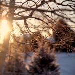 """Frosty Morning"" by RyanShepard"