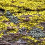 """Lichen-Covered Rock"" by FrankZullo"