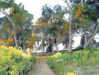 Meadow in Balboa Park