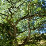 """Waimea Tree"" by travelbug"