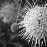 """""""Spiky"""" by VirginiaZuelsdorf"""