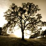 """Diablo_tree"" by JBPhotography"